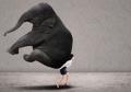 complessita-elefante-manager.jpg