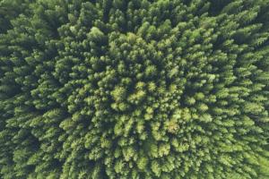 ambientale....jpg