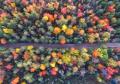 ambiente alberi colorati.jpg