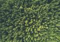 ESG - Alberi verdi.jpg