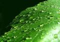 green-leaf-1182415-1280x912.jpg