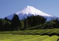 Giappone-monte-Fuji-coltivazioni.jpg
