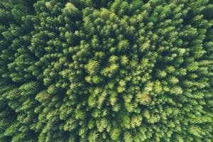 Perché i filtri ESG fanno bene al Corporate
